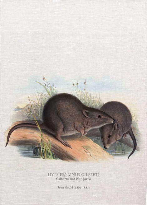 Gilberts Rat Kangaroo, HYPSIPRYMNUS GILBERTI, by John Gould printed on tea towel, Made in Australia