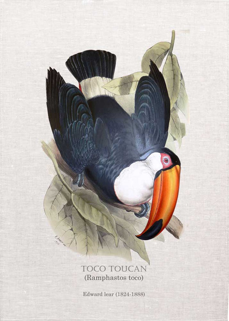 TOCO TOUCAN (Ramphastos toco) Illustrated by John Gould (1804-1881) printed on tea towel Made in Australia