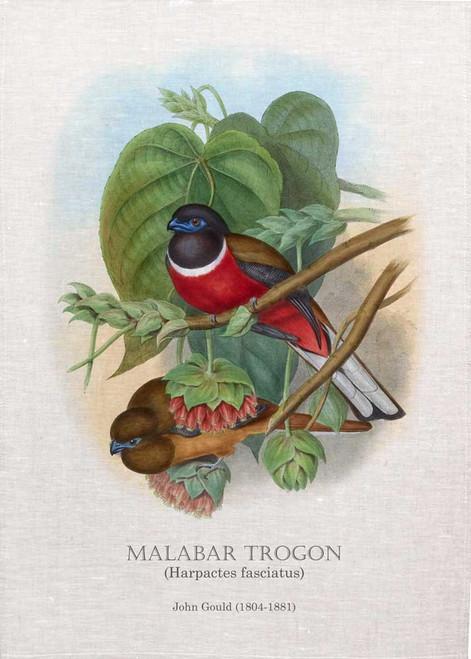 Malabar Trogon (Harpactes fasciatus) Illustrated by John Gould (1804-1881) printed on tea towel Made in Australia
