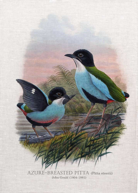 azure-breasted pitta (Pitta steerii)  Illustrated by John Gould (1804-1881) printed on tea towel Made in Australia