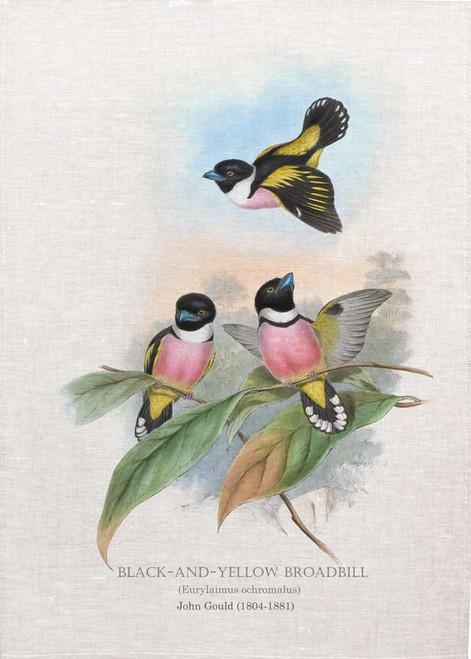 black-and-yellow broadbill (Eurylaimus ochromalus) Illustrated by John Gould (1804-1881) printed on tea towel Made in Australia