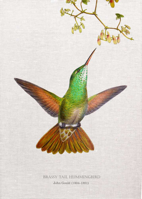 brassy tail Hummingbird) Illustrated by John Gould (1804-1881) printed on tea towel Made in Australia