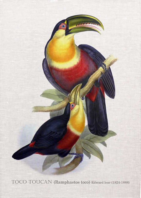 TOCO TOUCAN (Ramphastos toco) illustrated by Edward Lear (1824-1888) printed on tea towel Made in Australia
