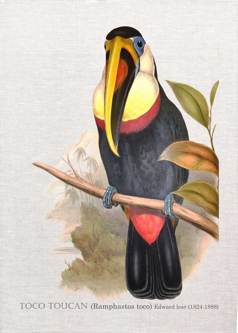 TOCO TOUCAN (Ramphastos toco) illustrated by Edward Lear (1824-1888), printed on tea towel Made in Australia
