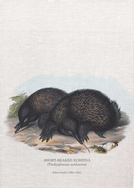 Short-beaked echidna (Tachyglossus aculeatus) by John Gould (1804-1881) printed on tea towel, Made in Australia
