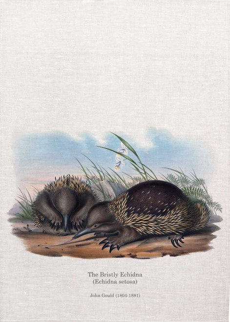 The Bristly Echidna(Echidna Setosa) by John Gould printed on tea towel, Made in Australia
