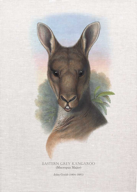 EASTERN GREY KANGAROO (Macropus Major) illustrated by John Gould (1804-1881) printed on tea towel, Made in Australia.