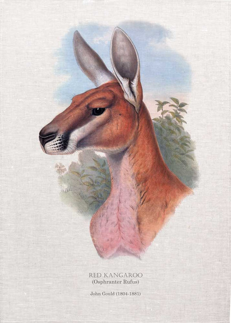 RED KANGAROO (Osphranter Rufus) illustrated by John Gould (1804-1881) printed on tea towel, Made in Australia.