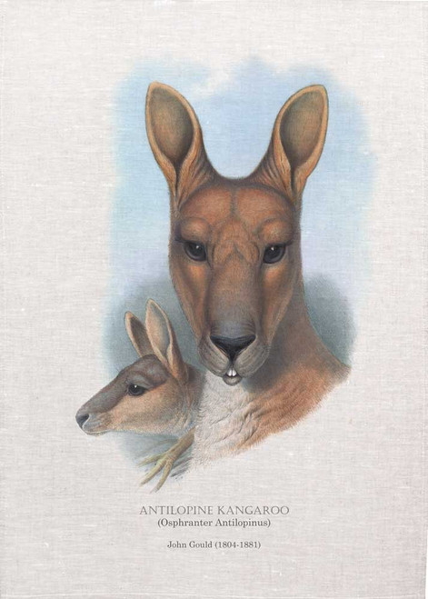 Antilopine kangaroo (Osphranter Antilopinus) illustrated by John Gould (1804-1881) printed on tea towel, Made in Australia.