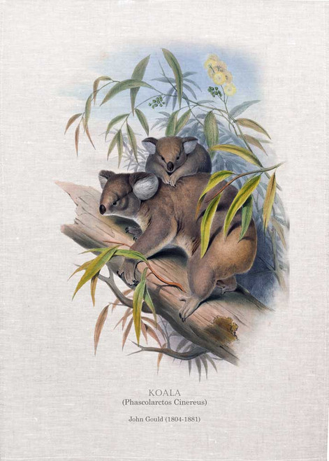 Koala (Phascolarctos Cinereus) illustrated by John Gould (1804-1881) printed on tea towel, Made in Australia.