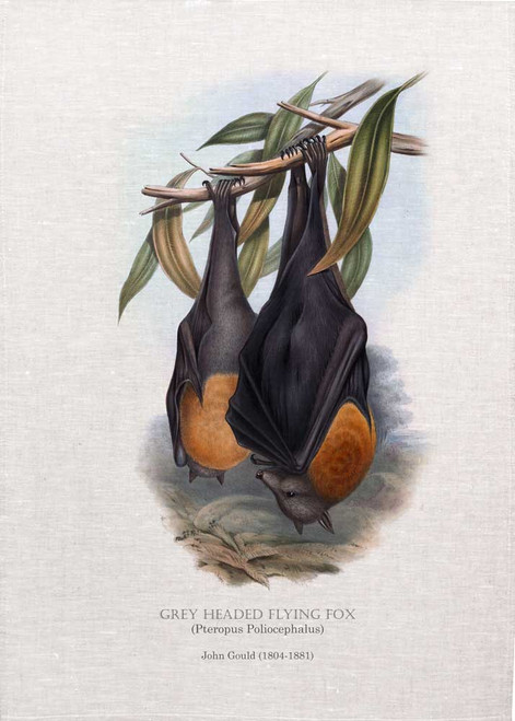 GREY HEADED FLYING FOX (Pteropus Poliocephalus) illustrated by John Gould (1804-1881) printed on tea towel, Made in Australia.