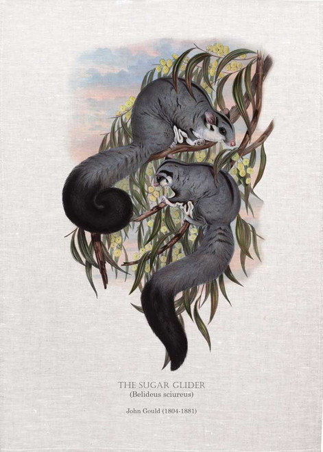 THE SUGAR GLIDER (Belideus sciureus) illustrated by John Gould (1804-1881) printed on tea towel, Made in Australia.