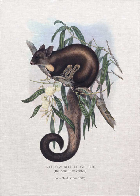 YELLOW BELLIED GLIDER (Belideus Flaviventer) illustrated by John Gould (1804-1881) printed on tea towel, Made in Australia.