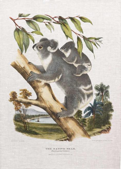 The native bear , Koala illustration from 1869 printed on tea towel, Made in Australia.
