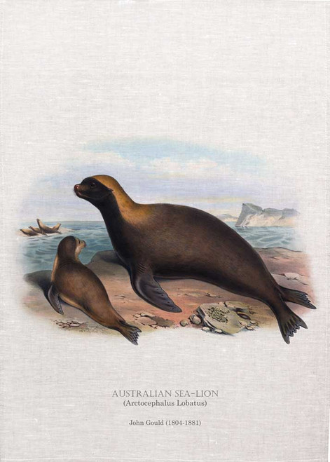Australian Sea-lion (Arctocephalus Lobatus) illustrated by John Gould (1804-1881) printed on tea towel, Made in Australia.