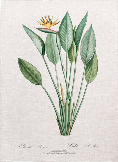 Bird of Paradise from Les Liliacées (1805) Pierre Joseph Redoute tea towels, Kitchen Towels, Printed in Australia
