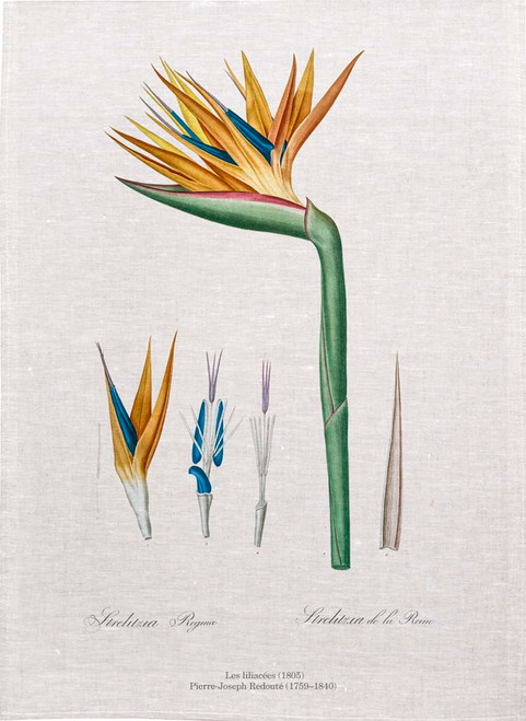 Bird of Paradise closeup from Les Liliacées (1805)Pierre Joseph Redoute tea towels, Kitchen Towels, Printed in Australia