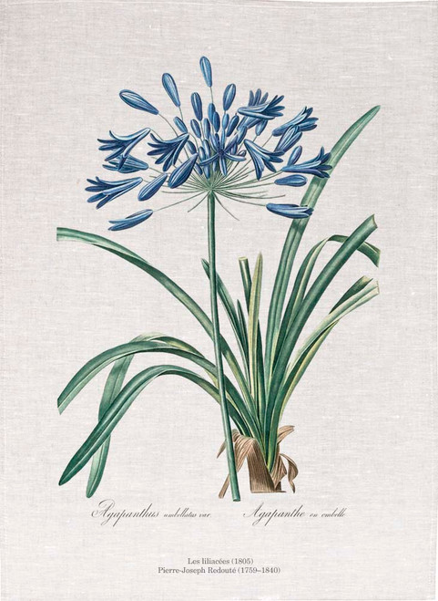 Pierre Joseph Redoute tea towel, African lily illustration, Made in Australia