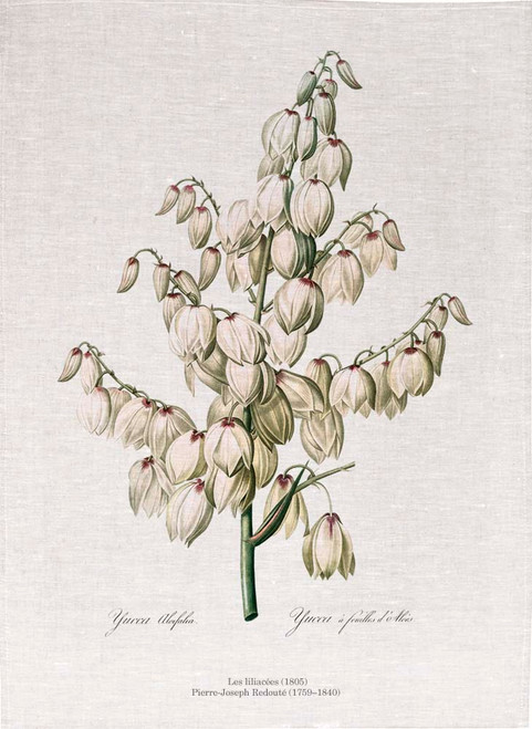 Pierre Joseph Redoute tea towel, Aloe yucca illustration, Made in Australia