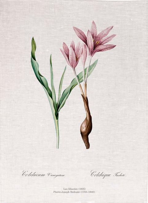 Pierre Joseph Redoute tea towel, Autumn crocus illustration, Made in Australia