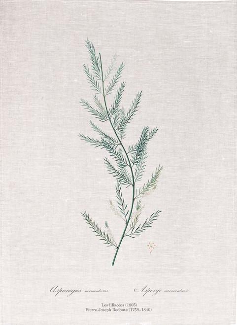 Pierre Joseph Redoute tea towel, Asparagus sarmentosus illustration , Made in Australia