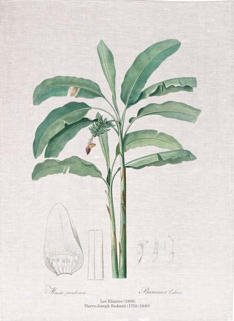 Pierre Joseph Redoute tea towel, Banana illustration, Made in Australia
