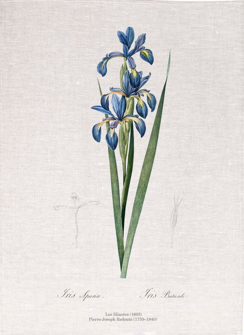 Pierre Joseph Redoute tea towel, Blue iris illustration, Made in Australia