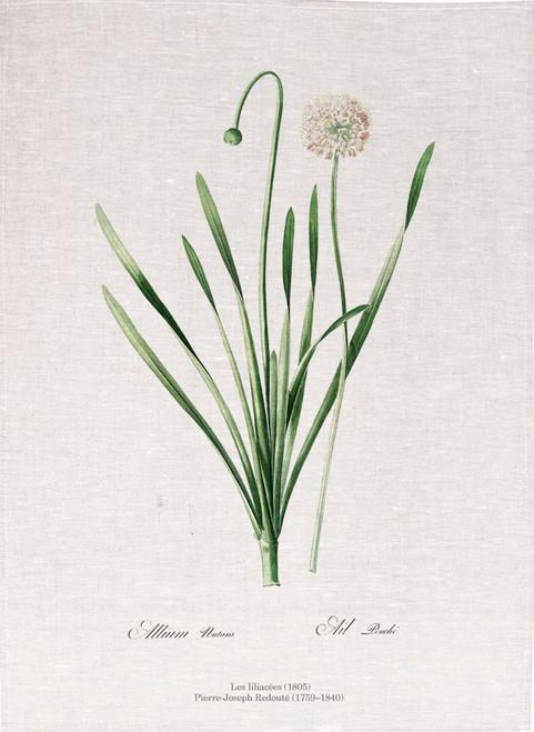 Pierre Joseph Redoute tea towel, Blue chives illustration, Made in Australia