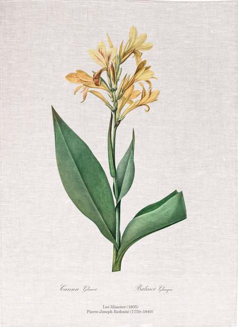 Pierre Joseph Redoute tea towel, Water canna illustration, Made in Australia