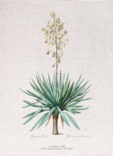 Pierre Joseph Redoute tea towel, Adam's needle illustration, Made in Australia