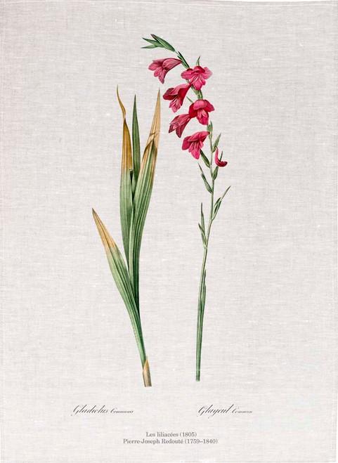 Pierre Joseph Redoute tea towel, Eastern gladiolus illustration, Made in Australia