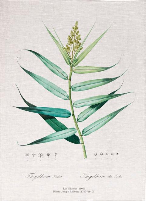 Pierre Joseph Redoute tea towel, Bush cane illustration, Made in Australia
