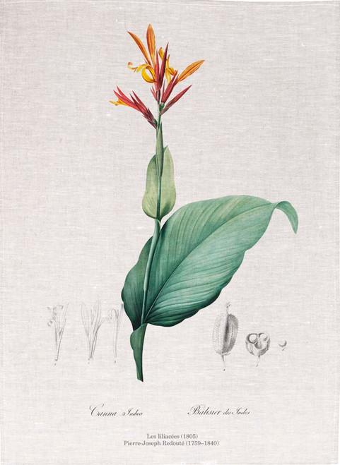 Pierre Joseph Redoute tea towel, Indian shot illustration, Made in Australia