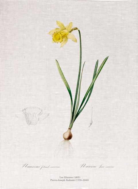Pierre Joseph Redoute tea towel, Lent lily illustration, Made in Australia