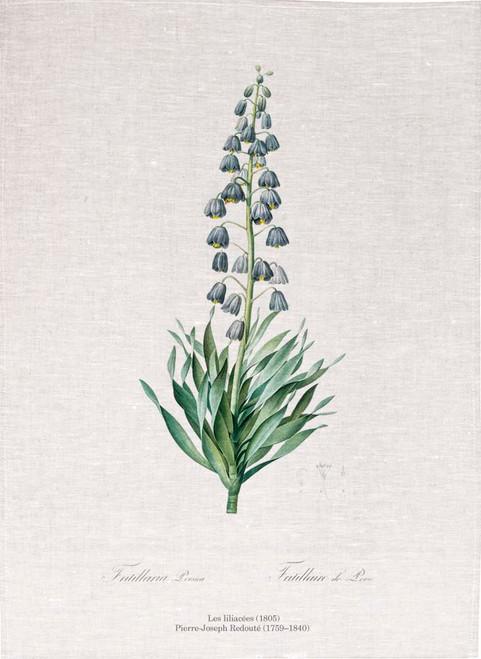 Pierre Joseph Redoute tea towel, Persian lily illustration, Made in Australia