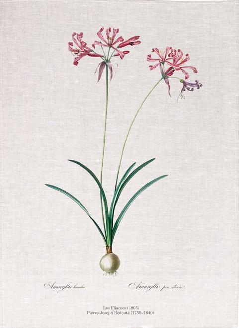Pierre Joseph Redoute tea towel, Nerine illustration, Made in Australia