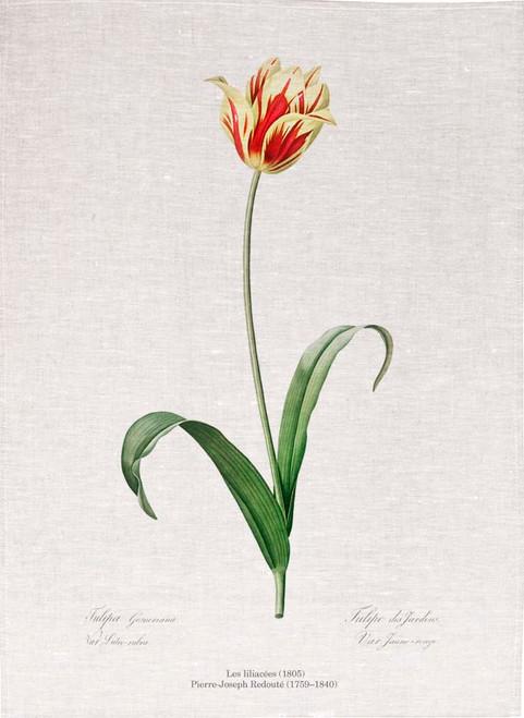 Pierre Joseph Redoute tea towel, Didier's tulip illustration, Made in Australia