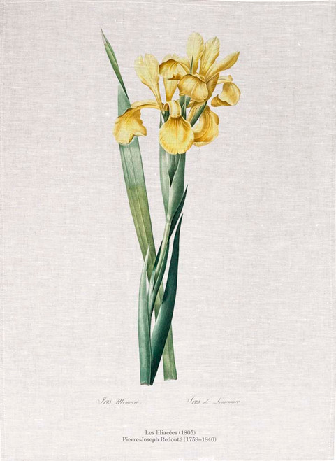 Pierre Joseph Redoute tea towel, Iris Monnieri illustration, Made in Australia