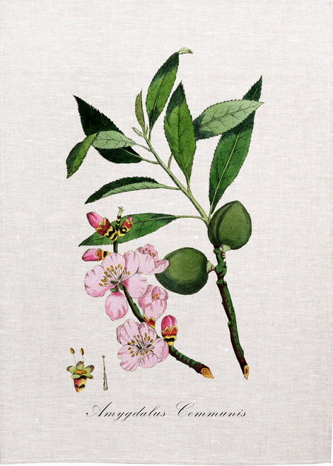 Almond illustration on tea towel, Made in Australia