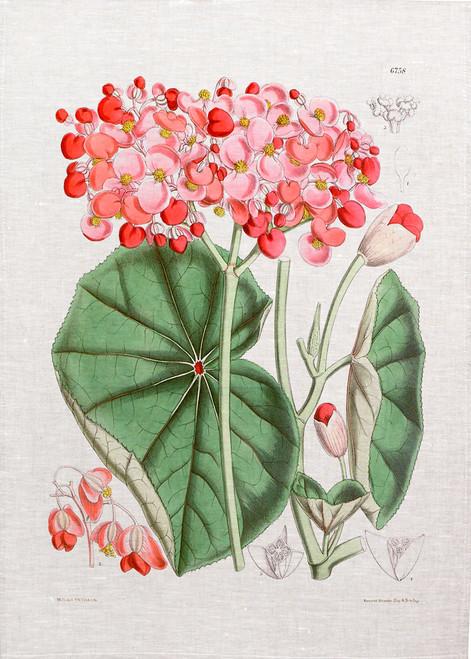 Flower Berg01  illustration on tea towel, Made in Australia
