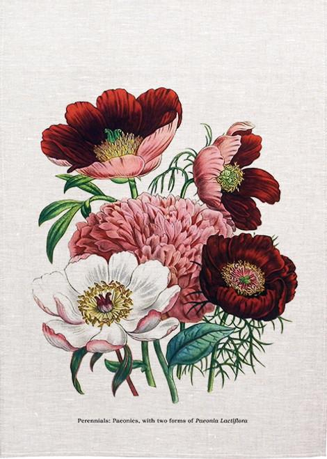 Perennials paeonies illustration on tea towel, Made in Australia