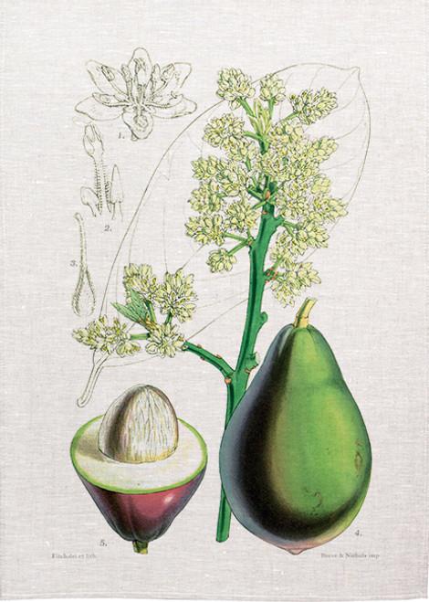 Fruit illustration BOT041 on tea towel, Made in Australia