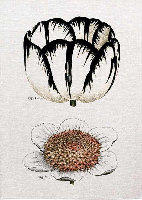 Flower textbook illustration BOT048 on tea towel, Made in Australia