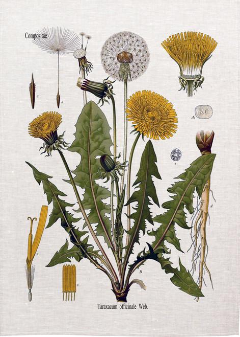 Dandelion illustration on tea towel, Made in Australia