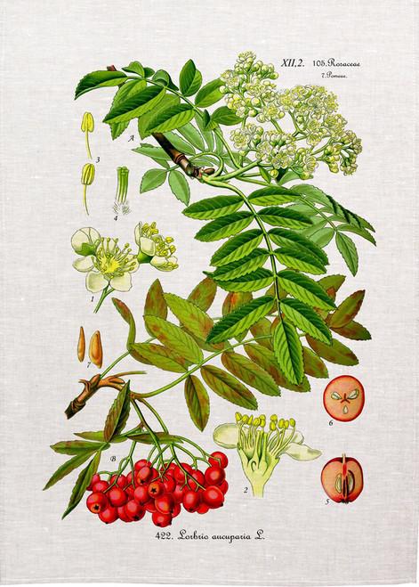 Berries vintage illustration on tea towel, Made in Australia