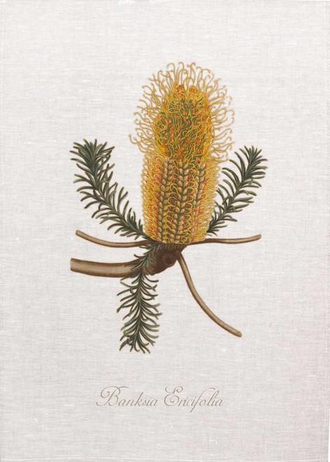 Banksia01 vintage illustration on tea towel, Made in Australia
