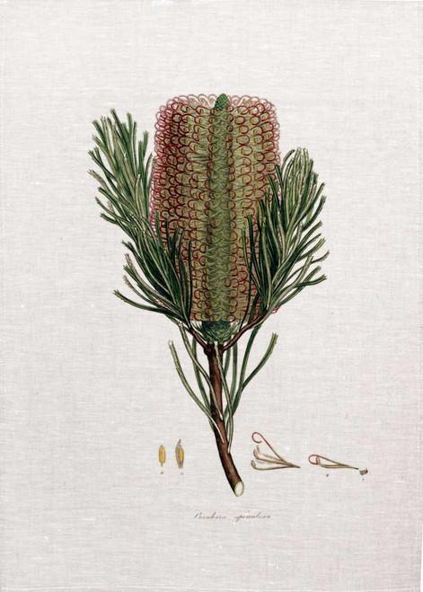Banksia02 vintage illustration on tea towel, Made in Australia