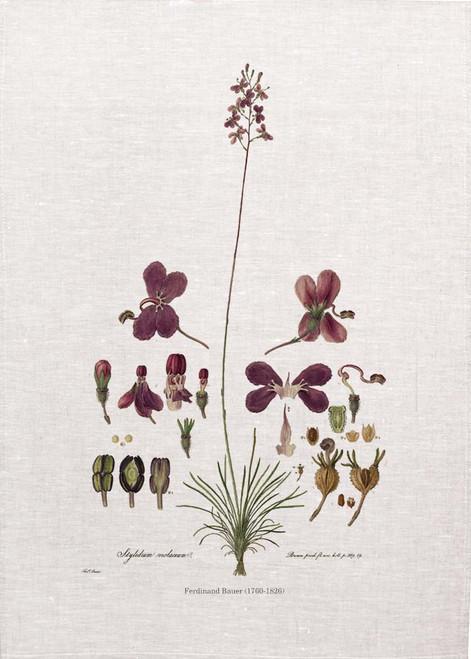 Stylidium Violaceum vintage illustration by Ferdinand Bauer (1760-1826) on tea towel, Made in Australia