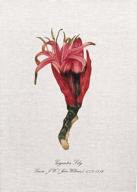 Gigantia Lily by Lewin, J. W. (John William), 1770-1819 illustration on tea towel, Made in Australia