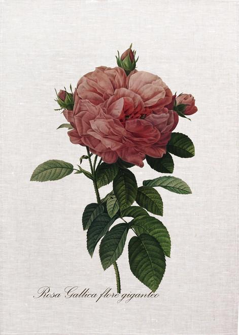 Rosa gallica flore giganteo, Pierre-Joseph Redouté on tea towel, Made in Australia